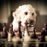 AIPP Hair of the Dog, Pet photography, by John Reyment